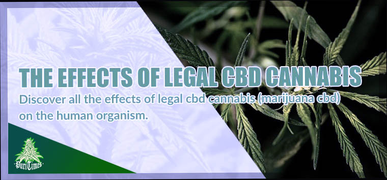 all the effects of legal cbd cannabis