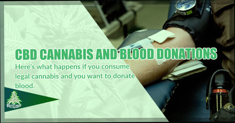 cbd cannabis and voluntary blood donations