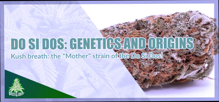 do si dos cannabis light genetics and origins