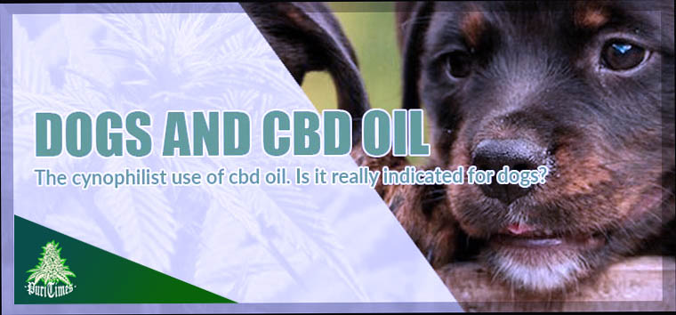 dogs and cbd oil