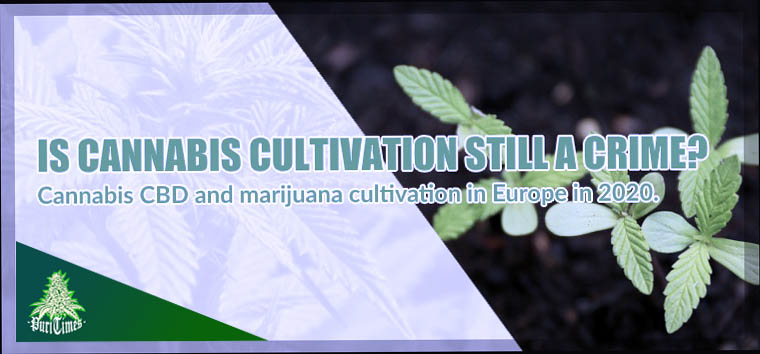 legal hemp home cultivation